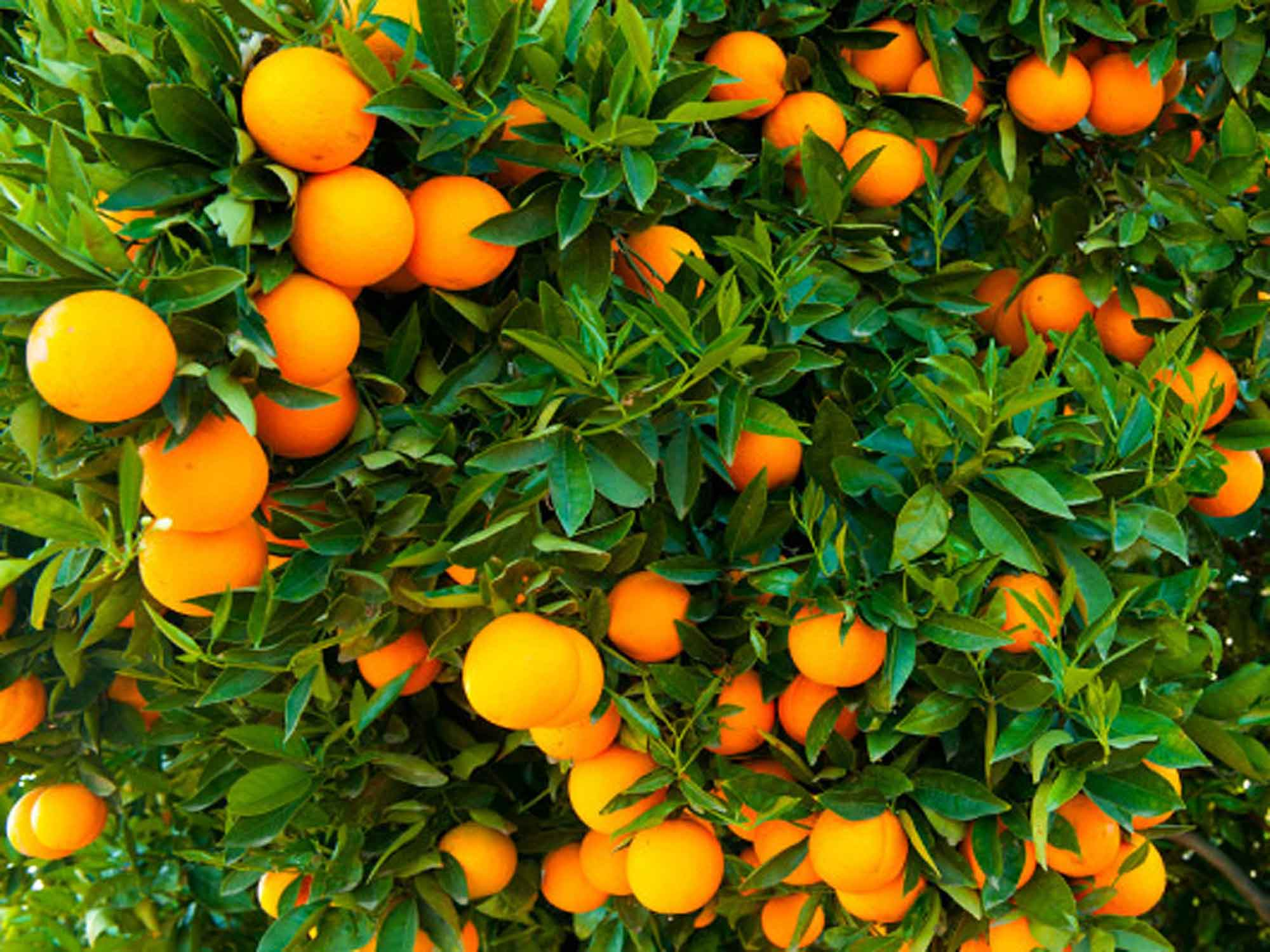 Tookii things to do with kids fruit tree one of the outdoor activities for kids