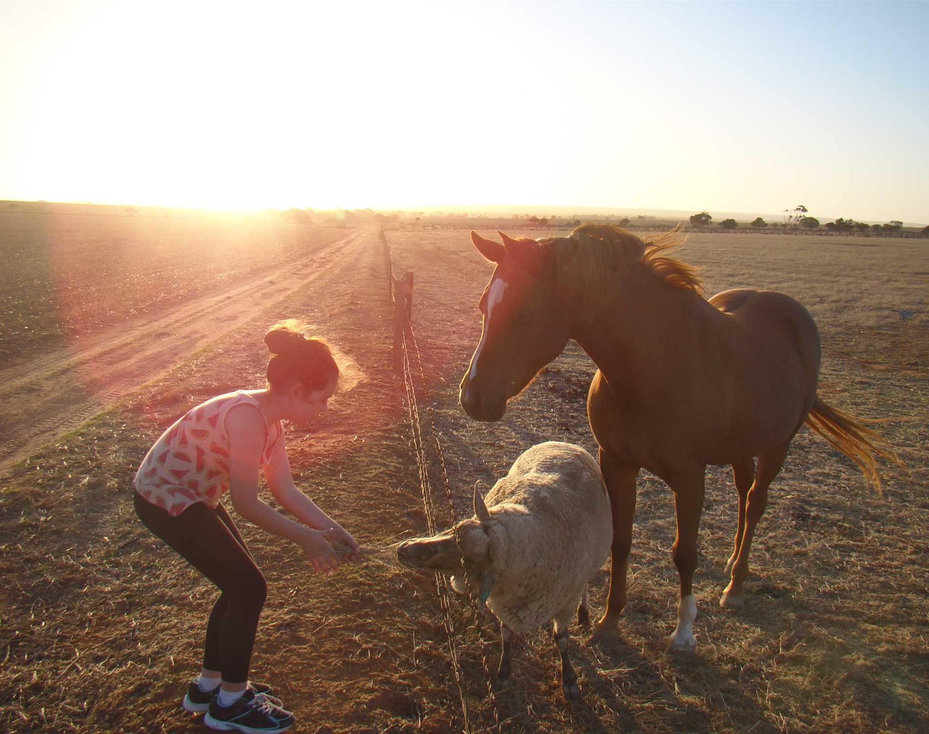 Tookii things to do with kids horse and sheep best friends one of the outdoor activities for kids