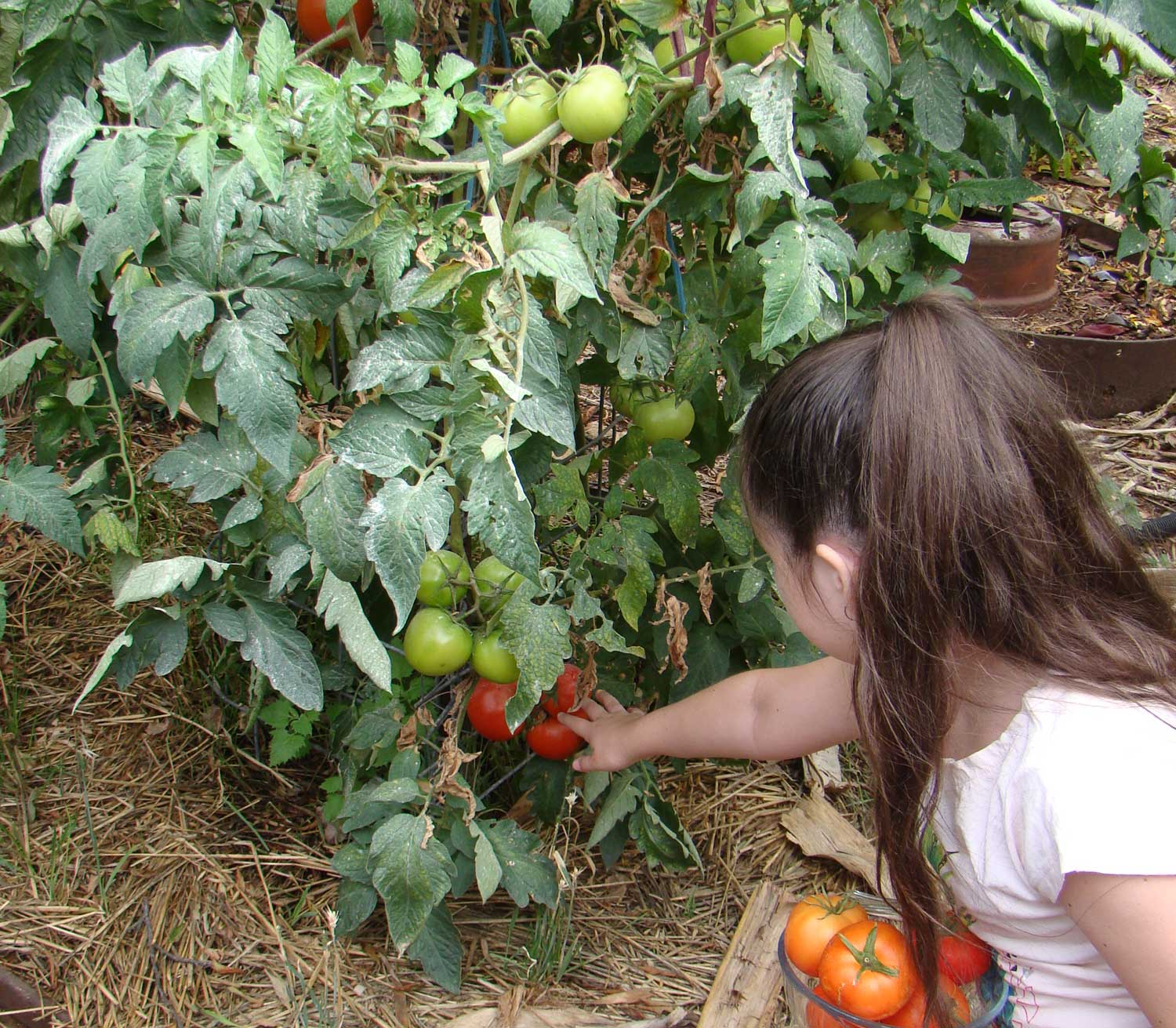 Tookii things to do with kids with tomato plant one of the outdoor activities for kids