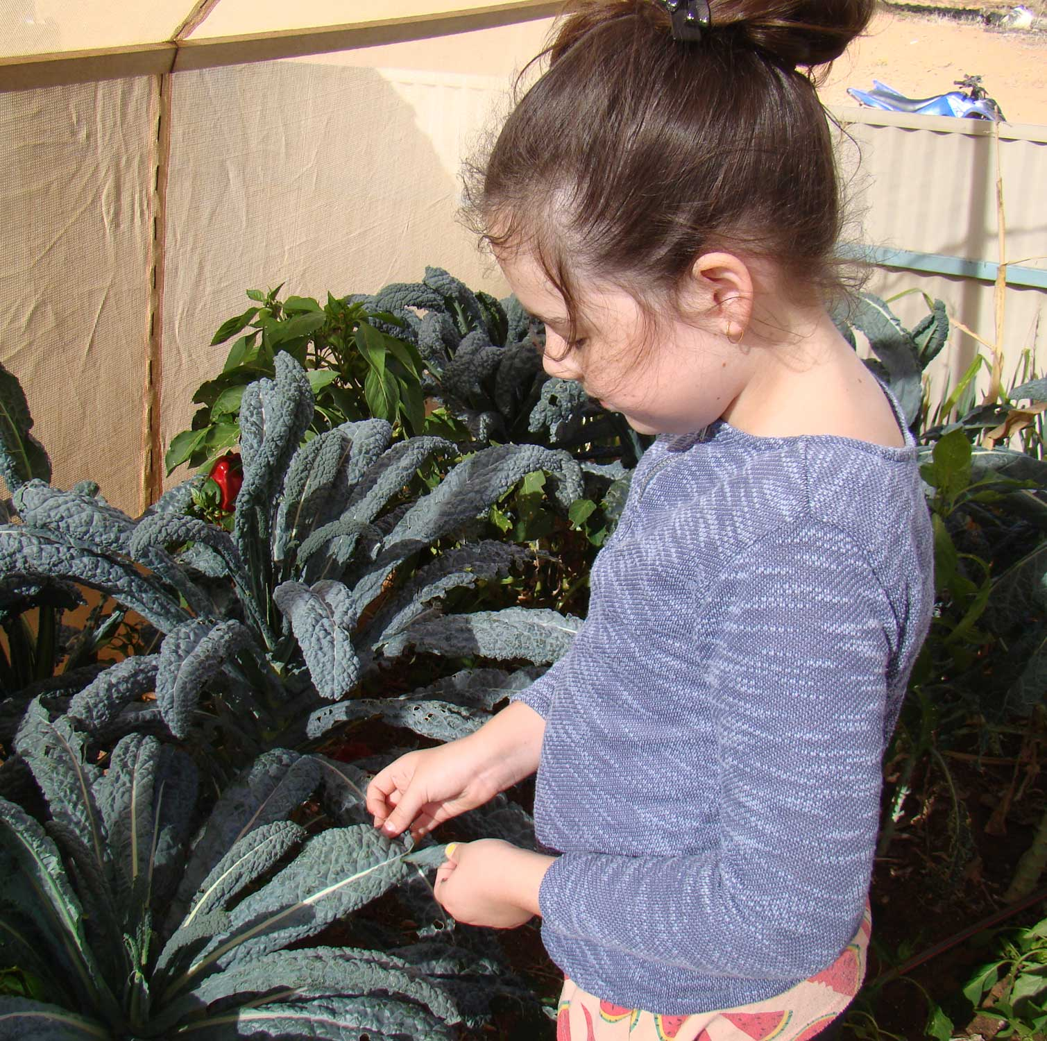 Tookii things to do with kids with kale one of the outdoor activities for kids