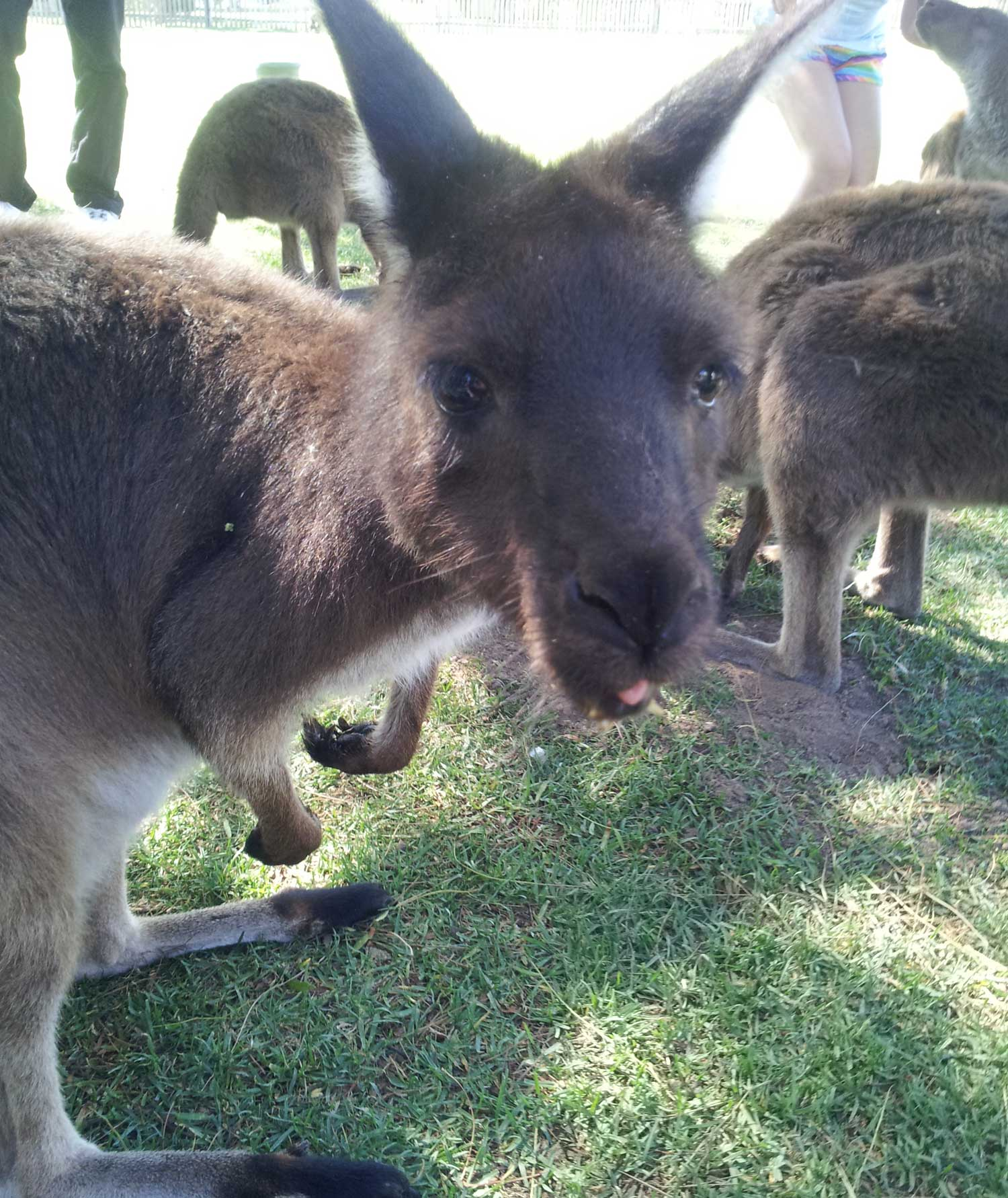 Tookii things to do with kids Kangaroo one of the outdoor activities for kids