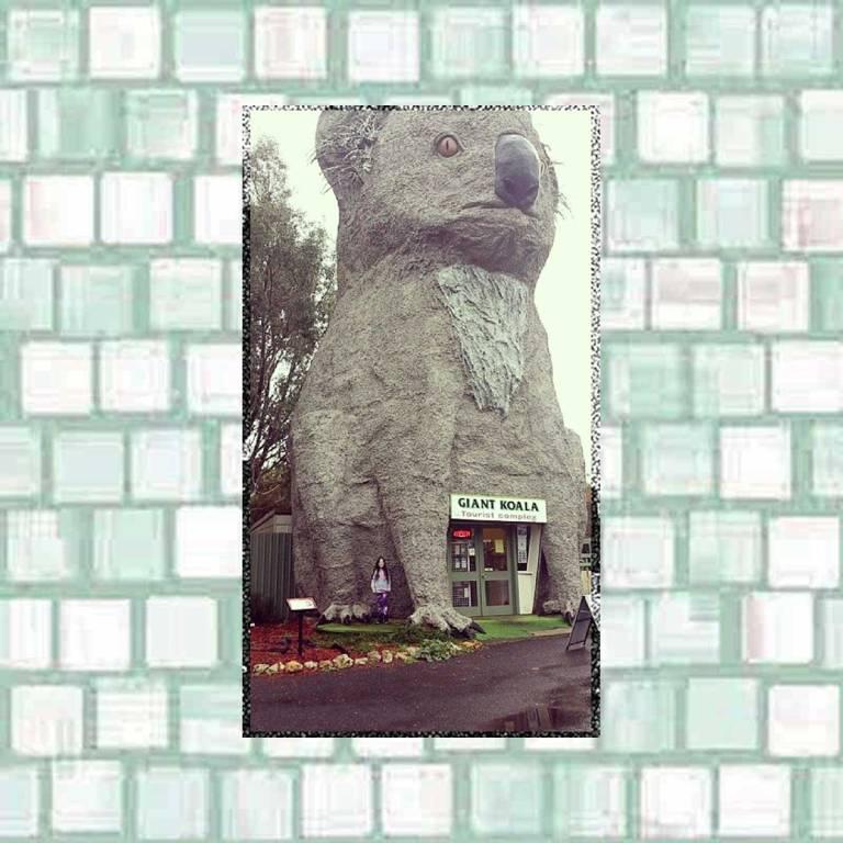 Tookii and the giant koala