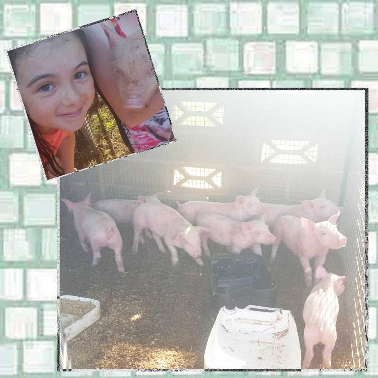 Tookii with little pigs