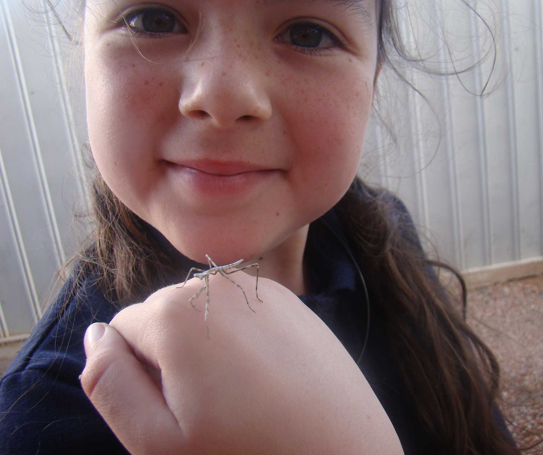 Tookii things to do with kids with a stick insect one of the outdoor activities for kids
