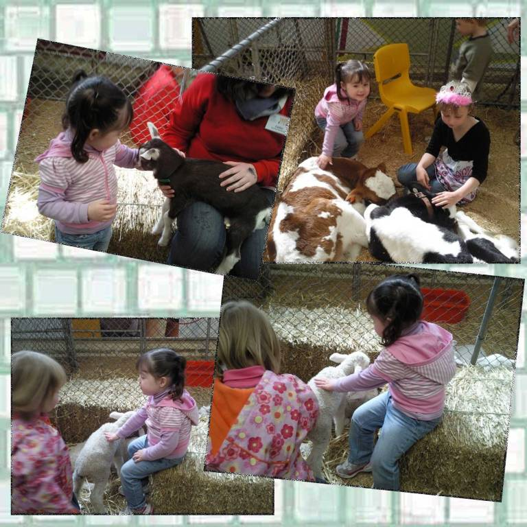 Tookii things to do with kids visits with show animals