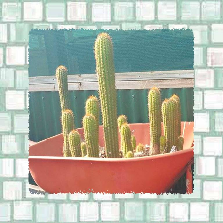 Tookii things to do with kids why cactus